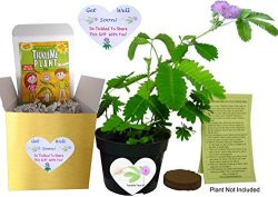 GET WELL GIFT PLANT – TickleMe Plant Gift Box Set – Grow the Plant that closes its l ...
