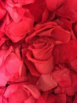 Wedding Hot Pink Fushia Watermelon Freeze Dried Real Rose Petals 2.4 oz 200 petals