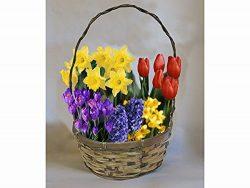 Flower Bulb Deluxe Gift Basket