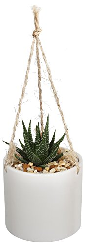 Costa Farms Live Succulent Haworthia Plant in Boho Inspired 4-Inch Ceramic Hanging Basket, Great ...