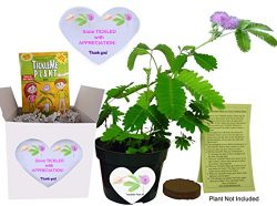 TickleMe Plant Fun Alternative to a THANK YOU Card. So Tickled APPRECIATION Gift Box – Gro ...
