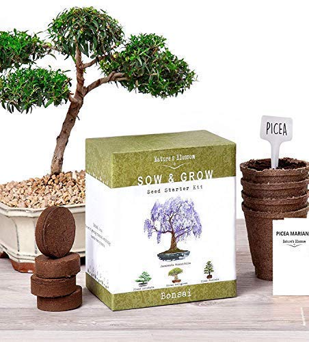 Nature's Blossom Bonsai Garden Seed Starter Kit – Easily Grow 4 Types of Miniature T ...
