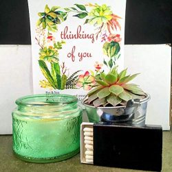 Thinking of You Live Succulent. Scented Candle Gift Box
